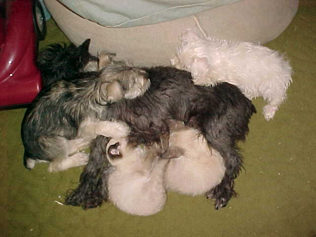 PUPPIES & KITTENS FOR SALE!!